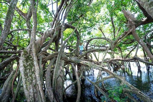 Základová fotografie zdarma na téma cestování, dešťový prales, dřevo, džungle