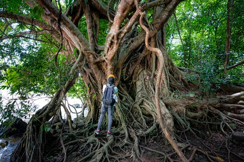 Unrecognizable traveler standing near tree