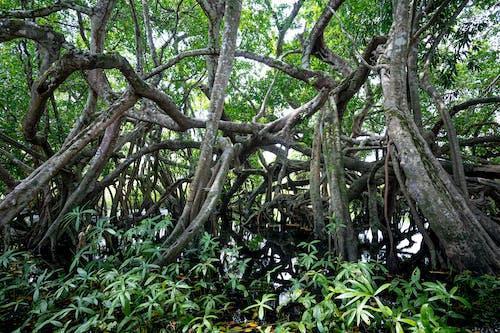 Základová fotografie zdarma na téma bažina, denní světlo, dešťový prales, dřevo