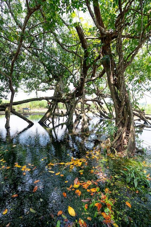 Základová fotografie zdarma na téma cestování, dřevo, flóra, krajina