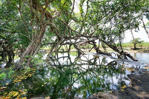 Základová fotografie zdarma na téma cestování, dřevo, džungle, flóra