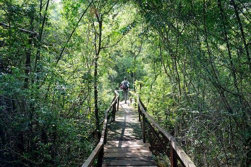 Základová fotografie zdarma na téma chůze, dešťový prales, dobrodružství, dřevo