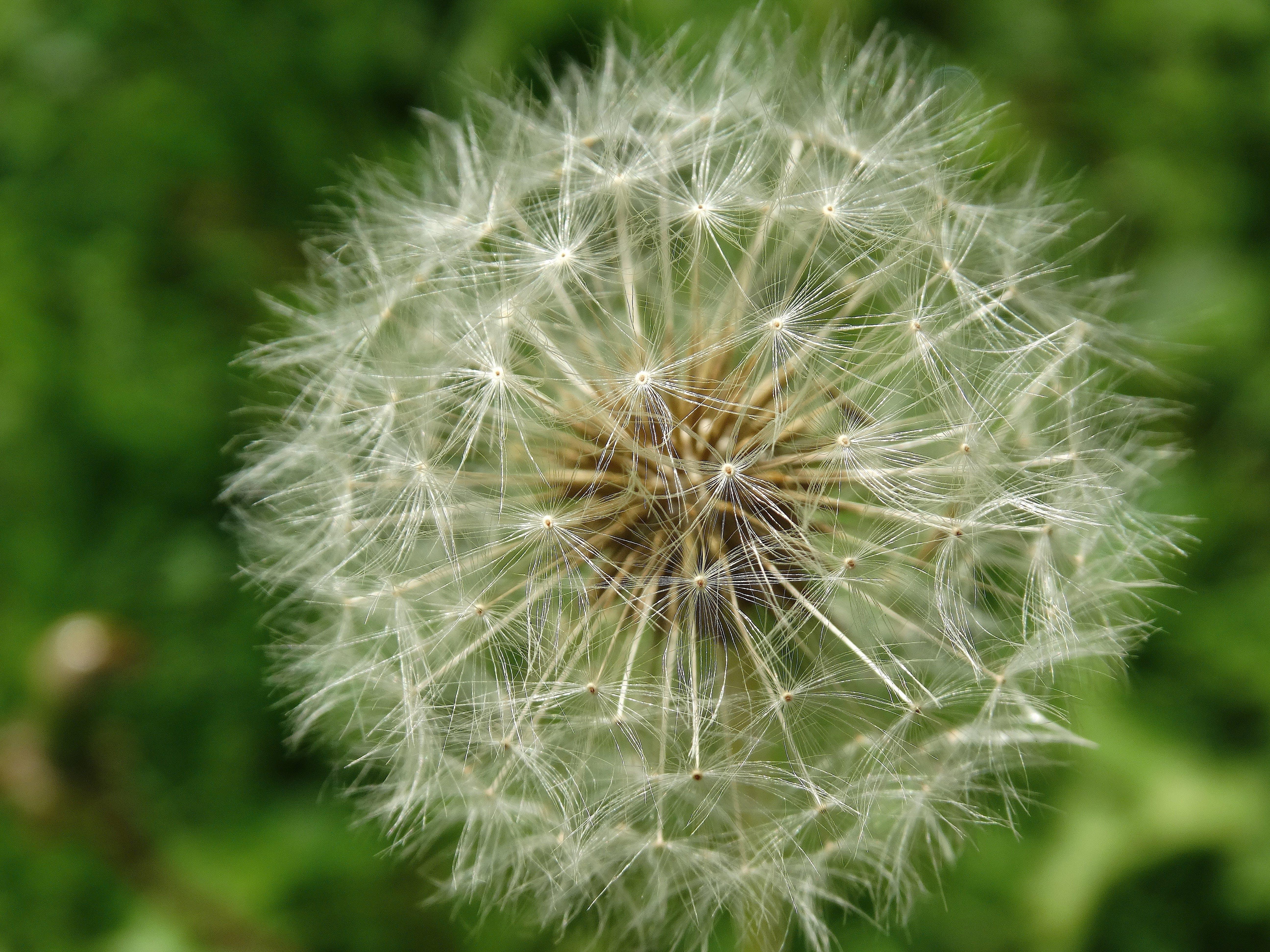 blühen, blume, flora