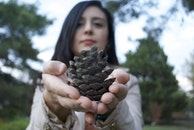person, woman, fir cone