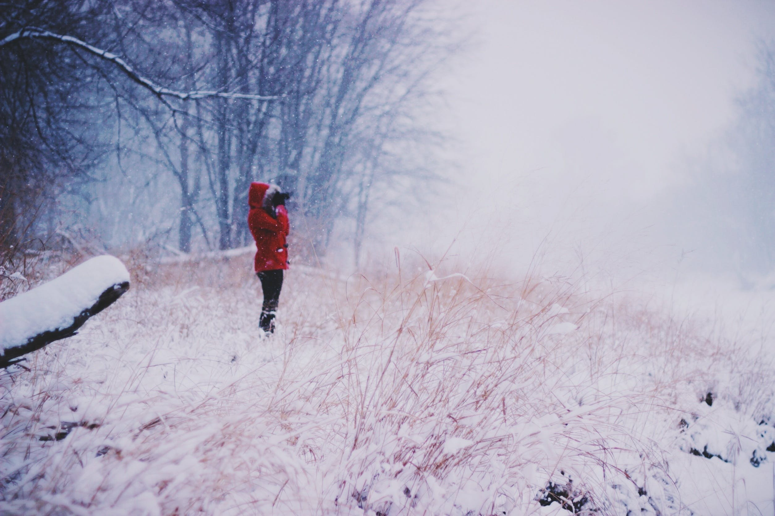 Free stock photo of cold, snow, nature, woman