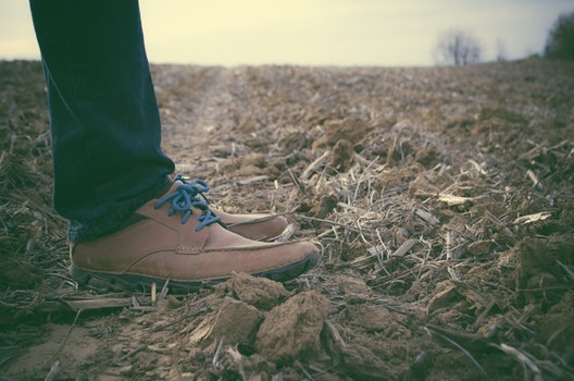 Free stock photo of feet, legs, countryside, farm