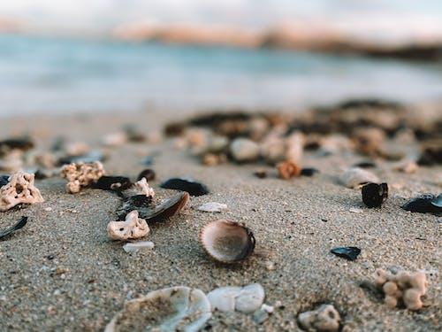 Close-Up Shot of Seashells on the Sand