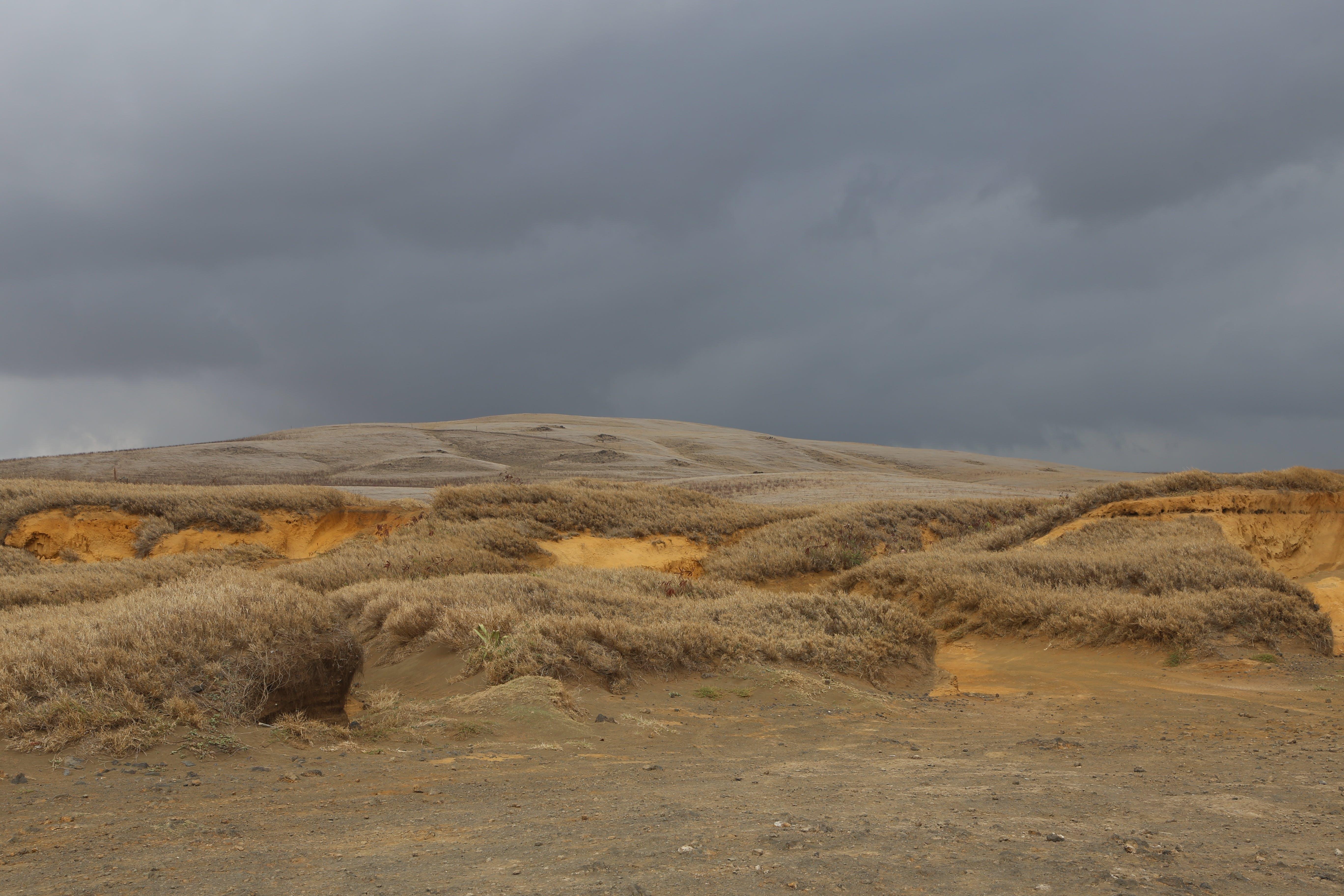 Brown Land
