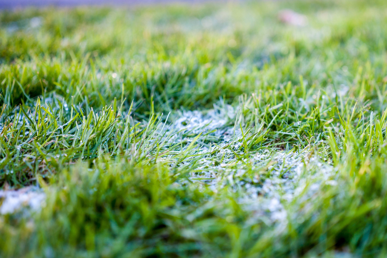 Free stock photo of close up, grass, green, green grass