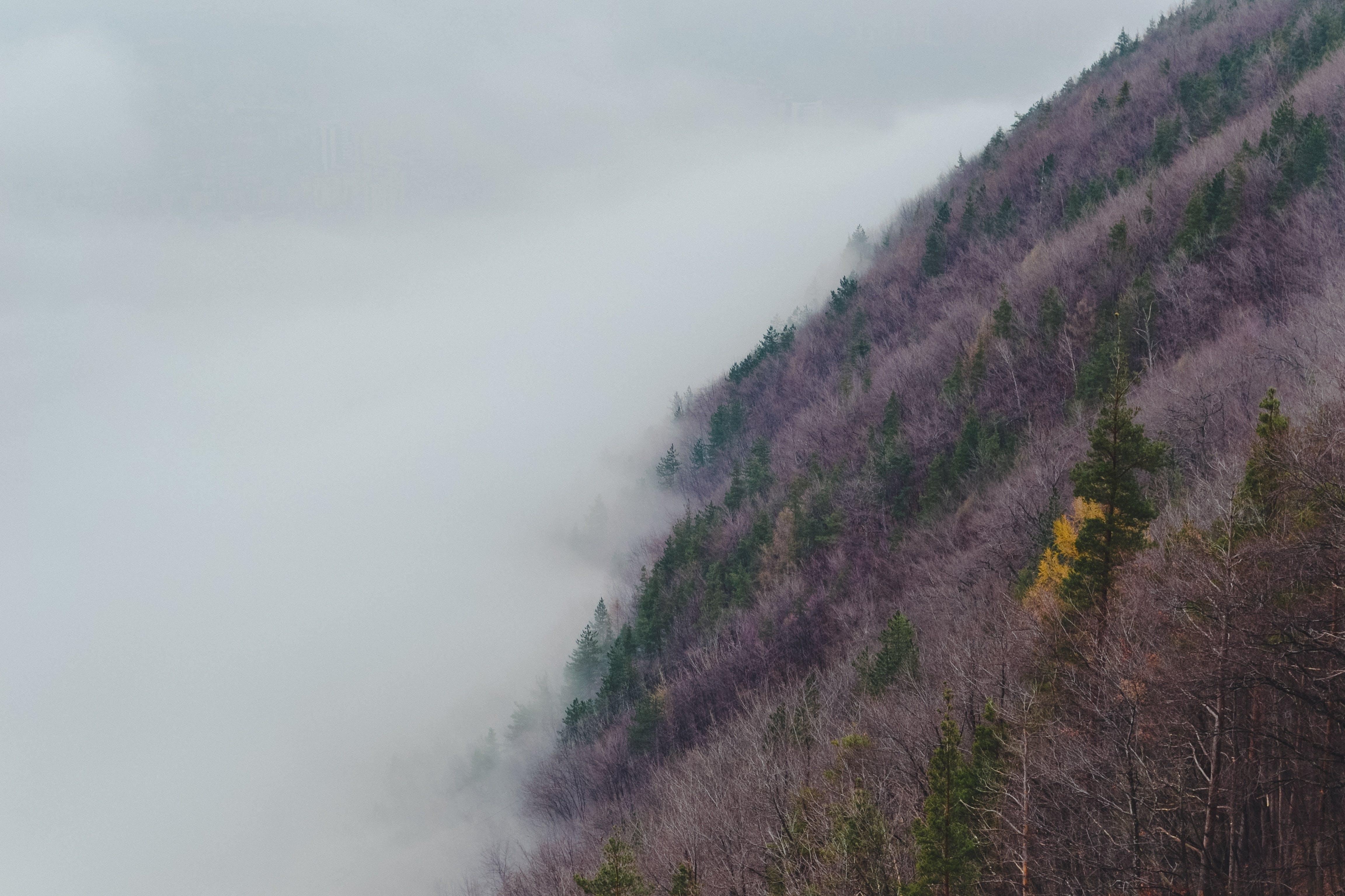 Free stock photo of autumn, fall, fog, foggy