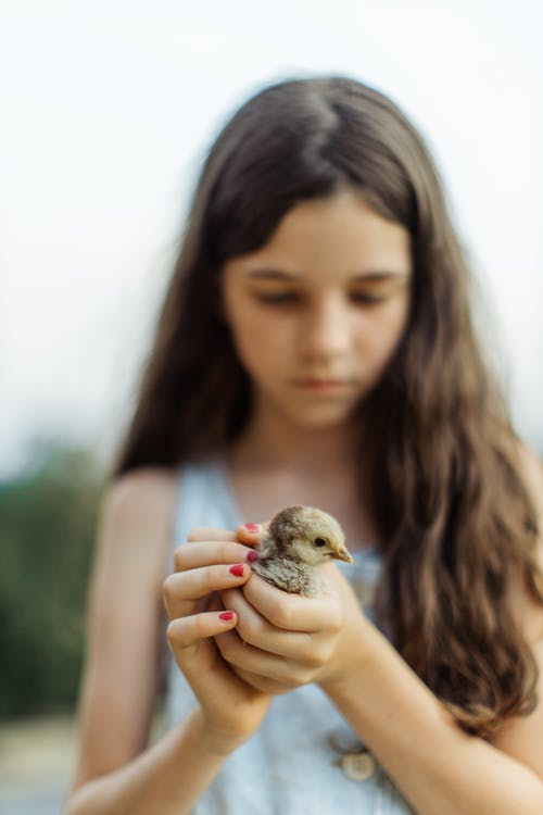 Close-Up Shot of a Girl Holding a Chick