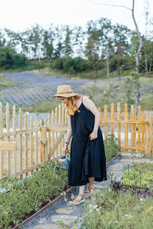 Бесплатное стоковое фото с вертикальный выстрел, двор, домашнее садоводство