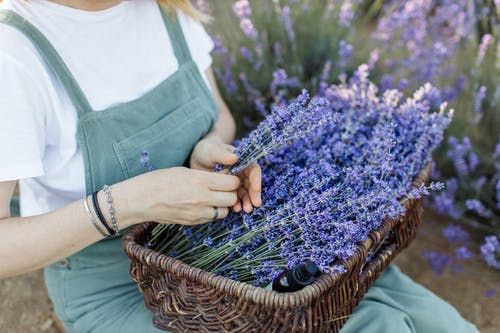 Person Holding Blue Flowers in Brown Woven Basket