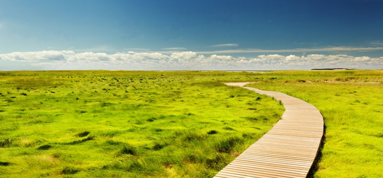 Free stock photo of landscape, countryside, path, grass