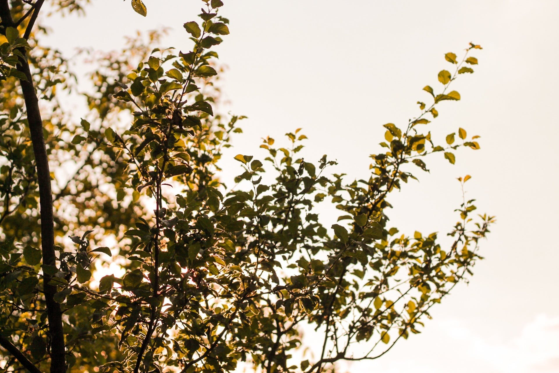 Free stock photo of nature, sky, forest, branches