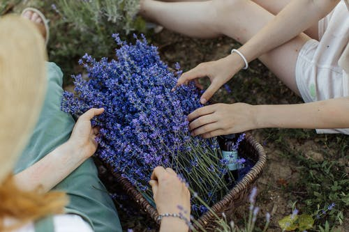 Person Holding Blue Flowers