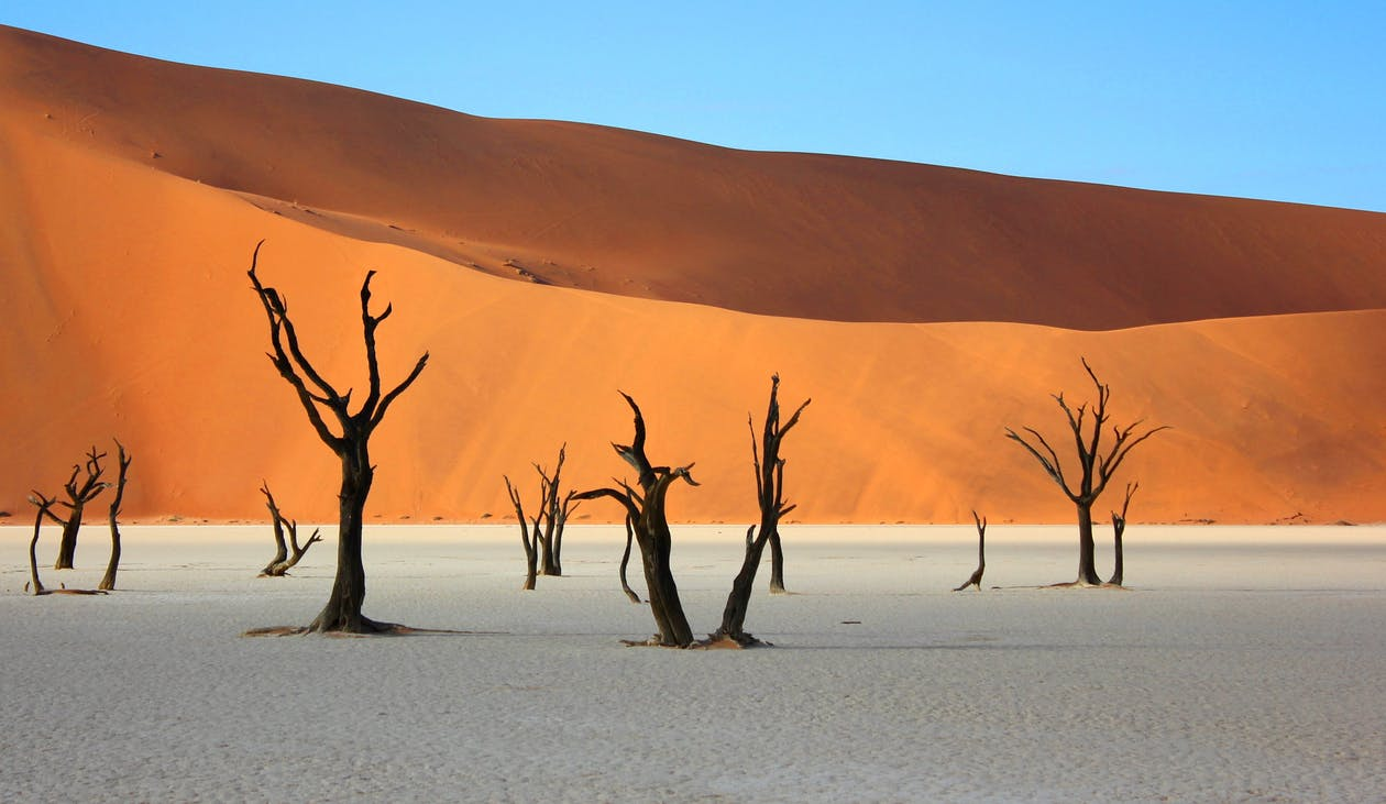 Immagine gratuita di acacia, africa, albero