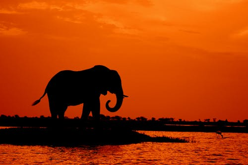 Santuario, elefantes , animales, Africa, Sudáfrica
