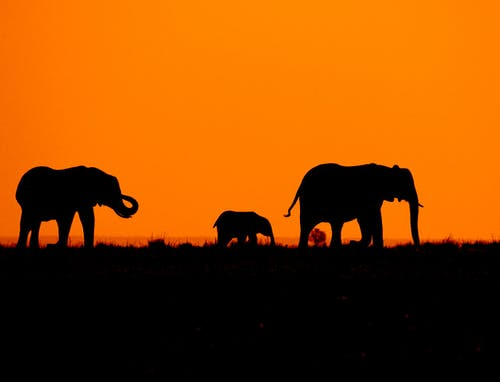 Silhouette of Elephant on Grass Field during Sunset