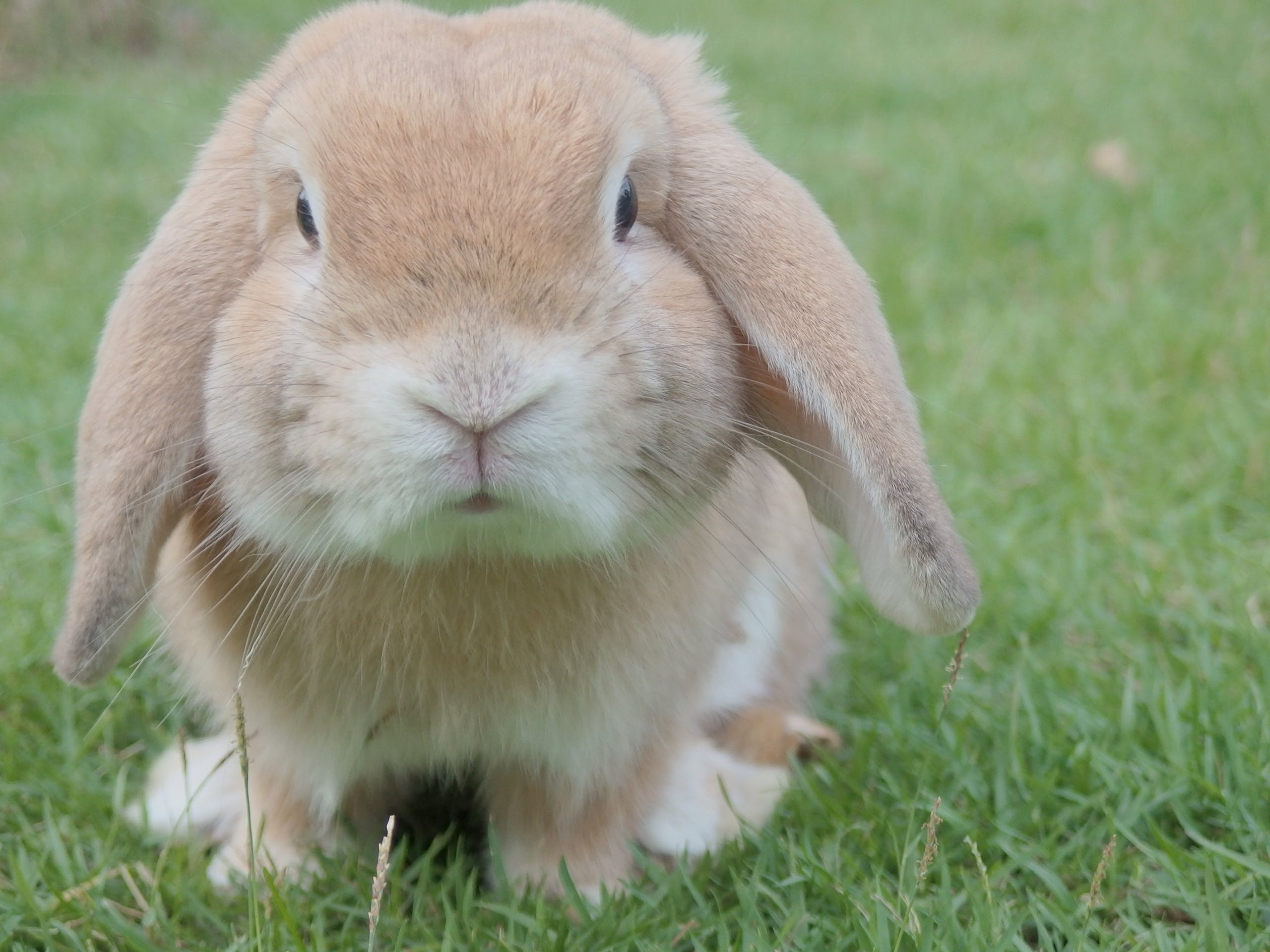 Free stock photo of animal, pet, cute, easter