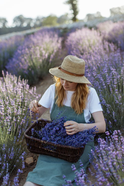 Woman in White Shirt and Brown Hat Sitting on Purple Flower Field