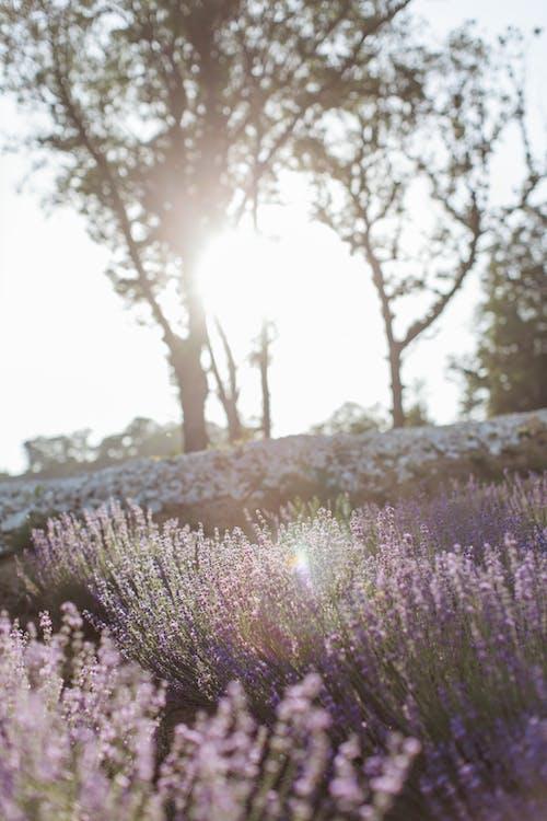 Imagine de stoc gratuită din a fi mamă, arbore, aromoterapie