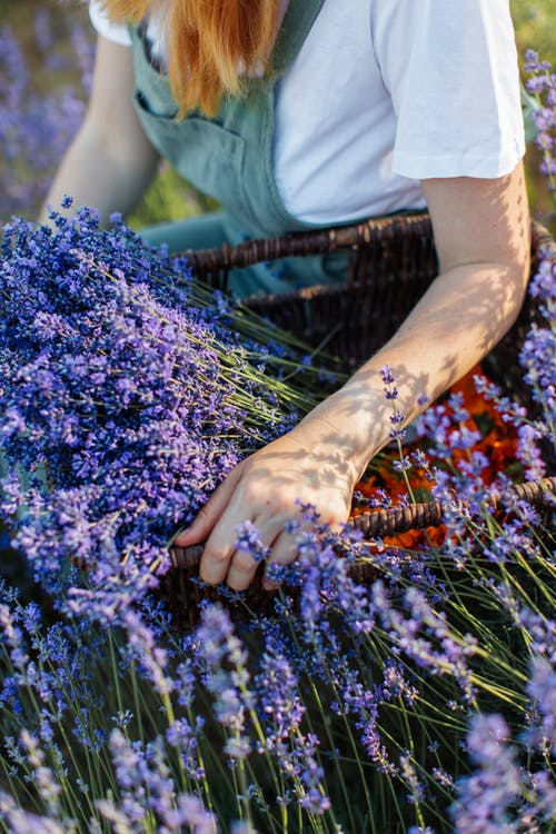 Person in White Shirt With Purple Flowers on Her Hands