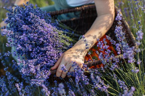 Person With Purple Flowers on Hands
