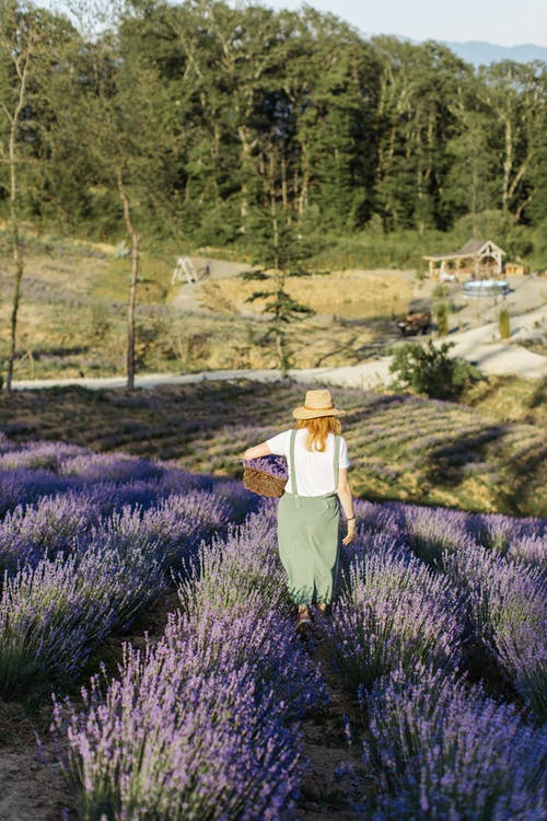 Woman in White Shirt and Gray Pants Standing on Purple Flower Field