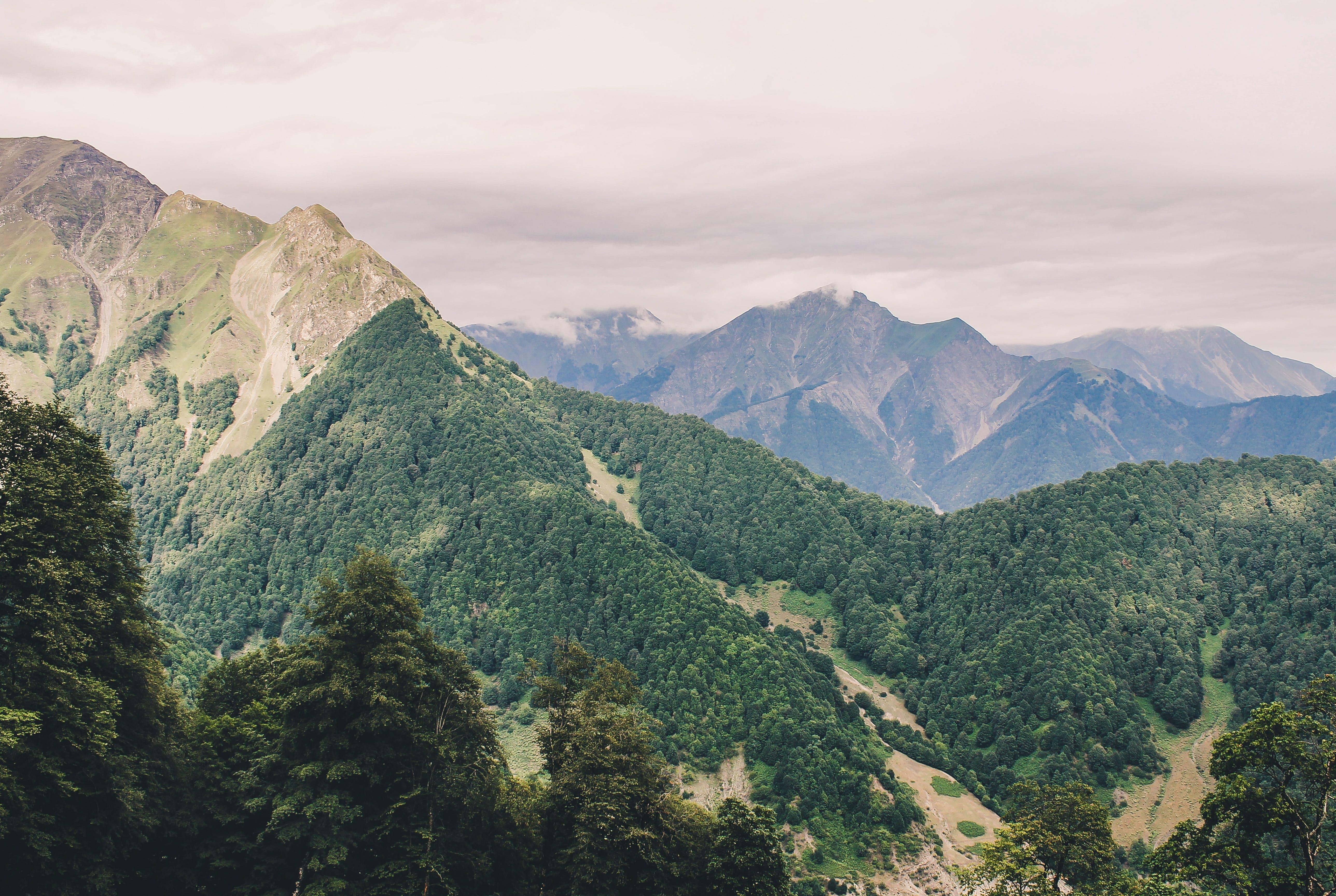 Foto d'estoc gratuïta de altitud, arbres, bosc, fotografia de natura