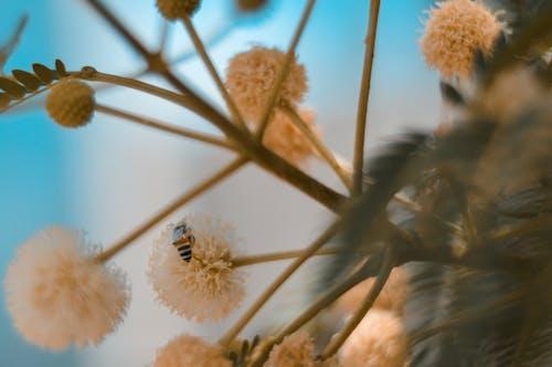 フラワーズ, 蜂の無料の写真素材