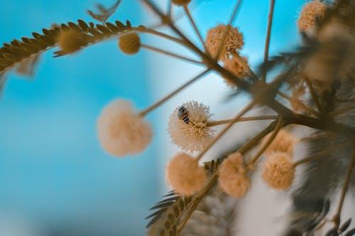 Foto profissional grátis de abelha, flor