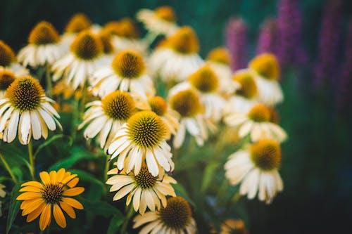 Fotos de stock gratuitas de al aire libre, amable, armonía