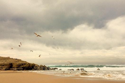 Free stock photo of sea, beach, ocean, summer