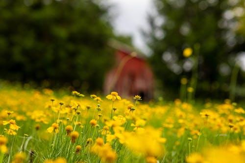 Základová fotografie zdarma na téma flóra, hloubka ostrosti, hřiště