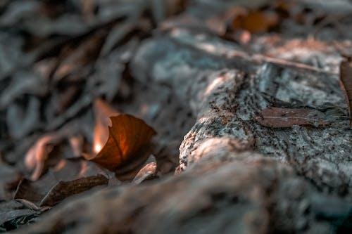 คลังภาพถ่ายฟรี ของ มด, แมลง, โคลสอัป