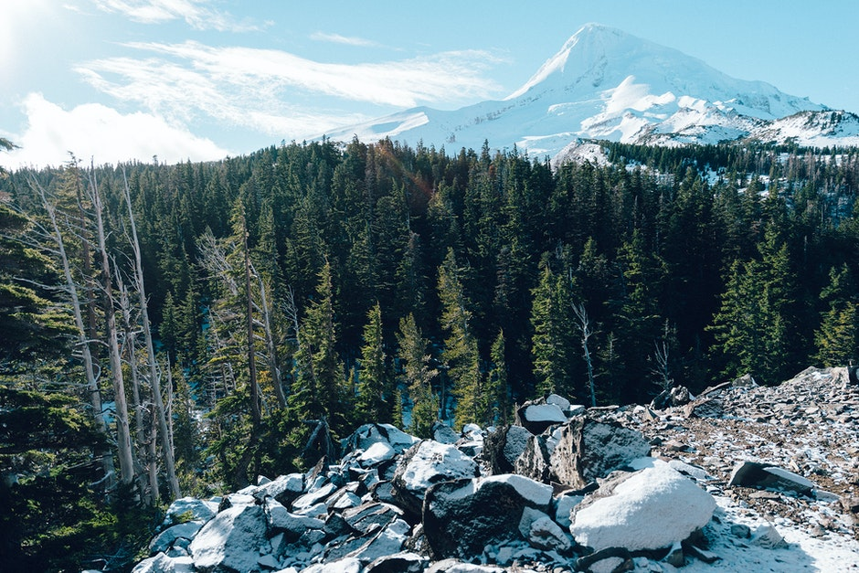forest, ice, mountain