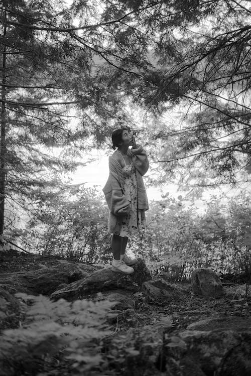Безкоштовне стокове фото на тему «відпочинок, група, Деревина, дерево»