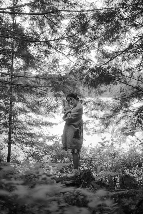 Gratis stockfoto met alleen, blad, boom, buiten
