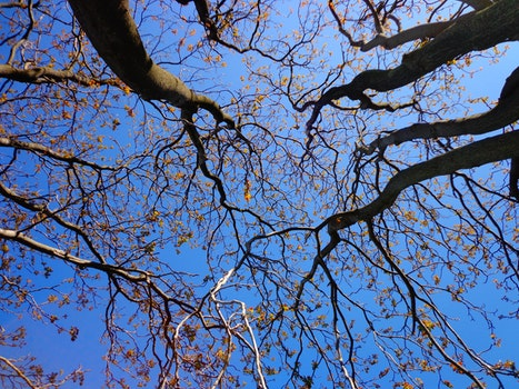Free stock photo of nature, sky, blue, branches