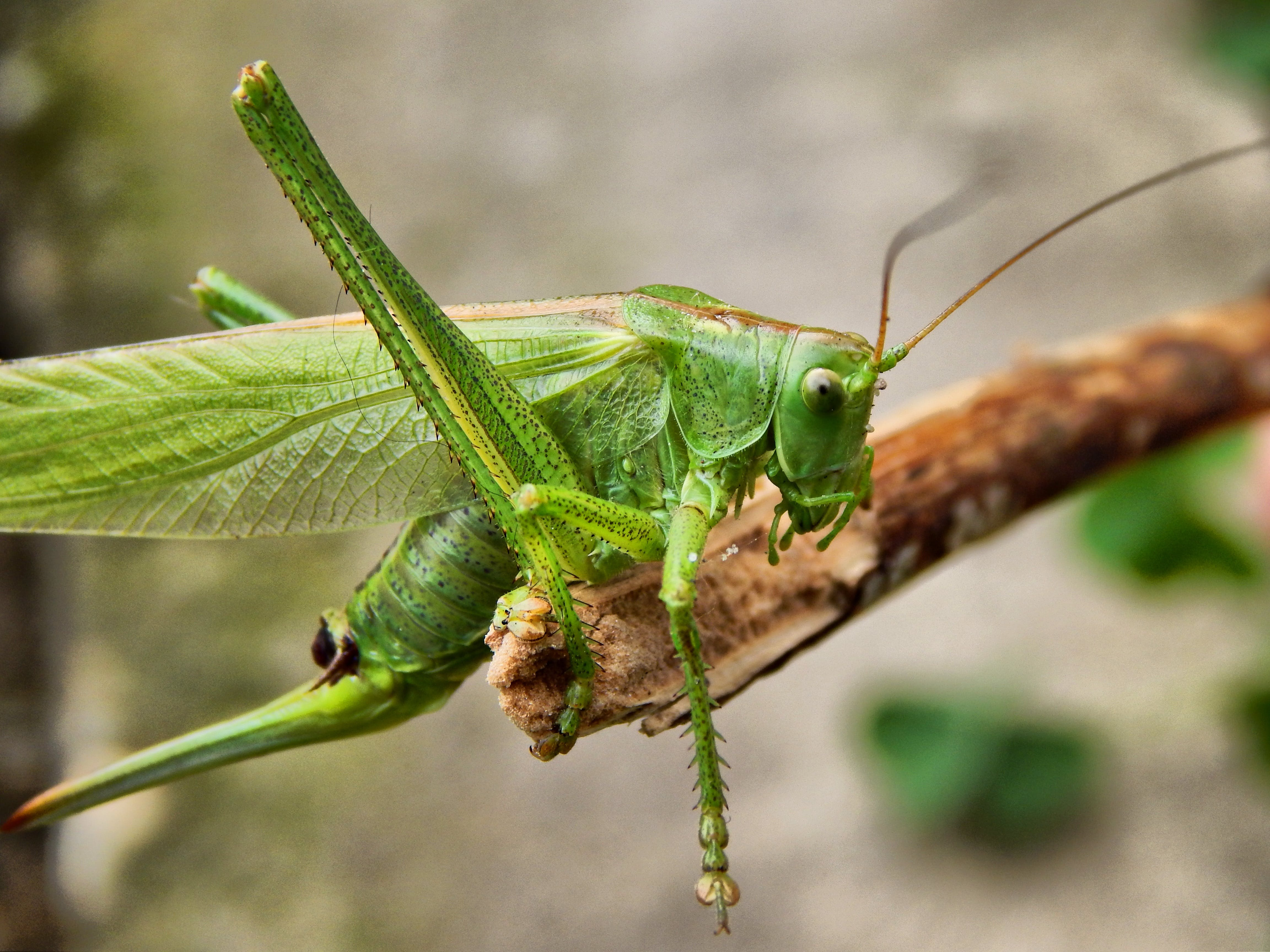Close Up Photogrpahy Green Insect