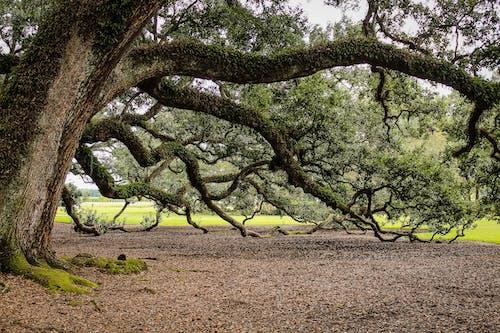 Kostnadsfri bild av grenar, lövverk, torra löv, träd