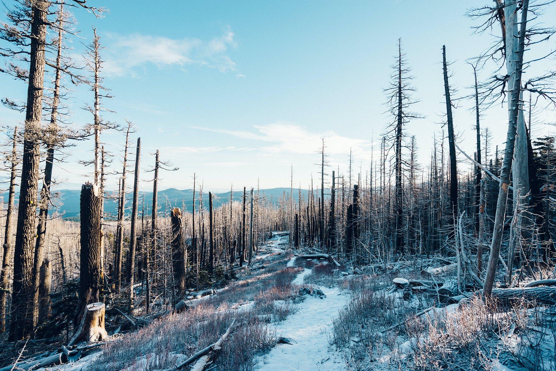 Gratis arkivbilde med fallne trær, snø, vinter