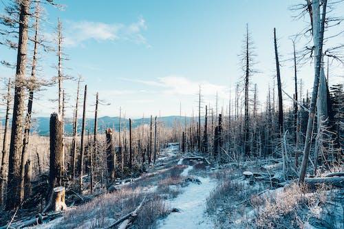 Darmowe zdjęcie z galerii z śnieg, upadłe drzewa, zima