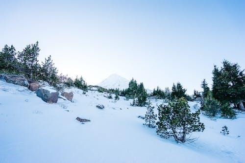 Gratis lagerfoto af bjerg, sne, vinter