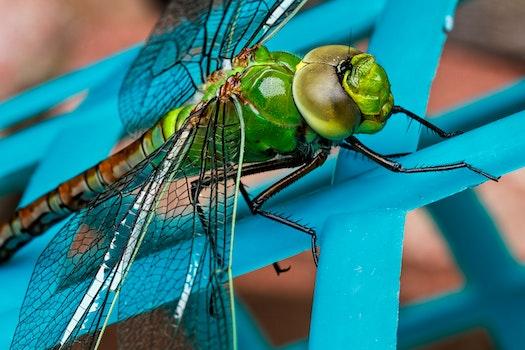 Kostenloses Stock Foto zu insekt, makro, libelle, flügel
