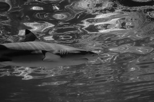 Photos gratuites de animal, aquatique, dangereux, eau