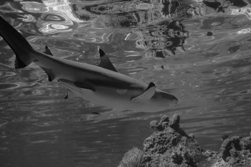 Photos gratuites de animal, aquatique, dauphin, eau