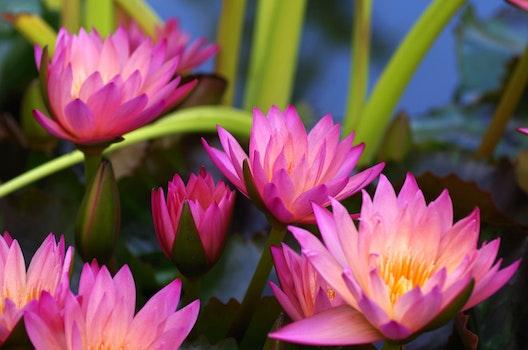 Purple Flower Plants After Dark
