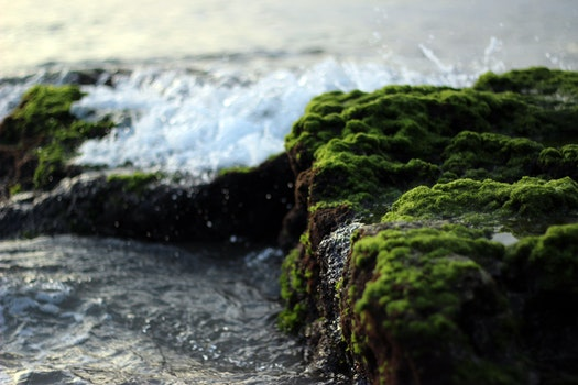 Water Against Green Grey Mossy Stones
